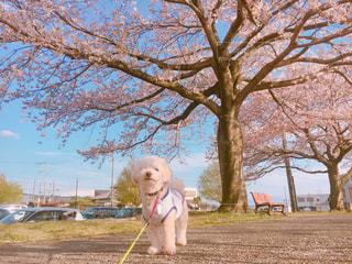 犬の写真・画像素材[481485]