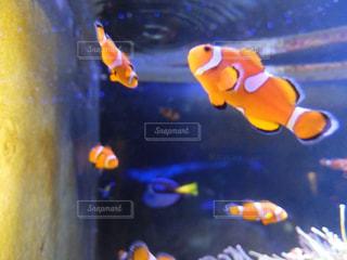 魚の写真・画像素材[484330]