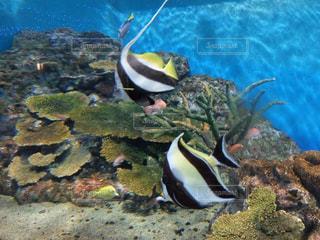 魚の写真・画像素材[484331]