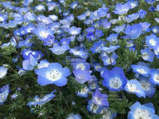 花の写真・画像素材[484369]