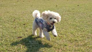 犬の写真・画像素材[484370]
