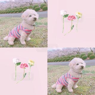 犬の写真・画像素材[666403]