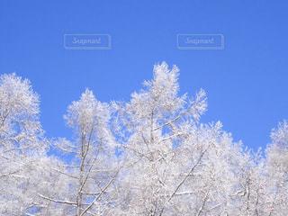 冬の写真・画像素材[670945]