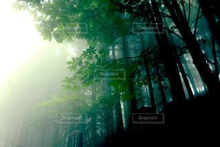近くの木のアップの写真・画像素材[792131]