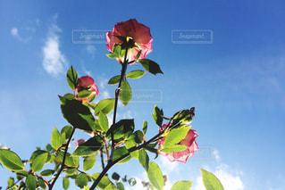 木の枝に花の花瓶の写真・画像素材[887153]