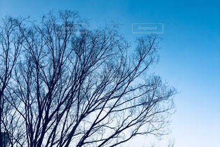 近くの木のアップの写真・画像素材[998210]