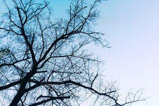 大きな木の写真・画像素材[1022600]