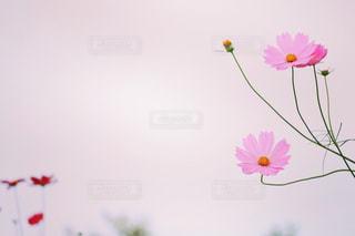 自然の写真・画像素材[258965]
