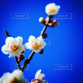 花の写真・画像素材[531216]