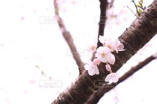 花の写真・画像素材[531217]
