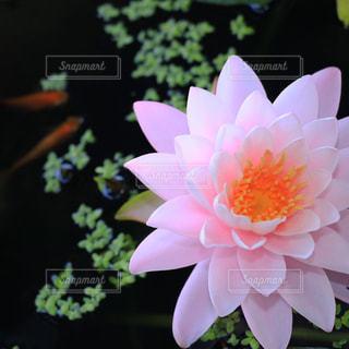 花の写真・画像素材[600506]
