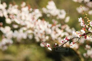 春近しの写真・画像素材[1804819]