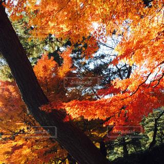 秋の写真・画像素材[673387]