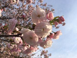 春の写真・画像素材[671686]