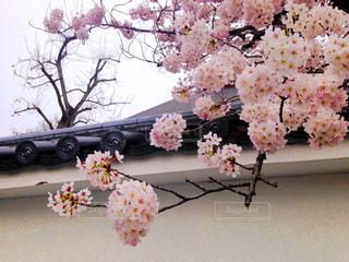 春の写真・画像素材[671708]
