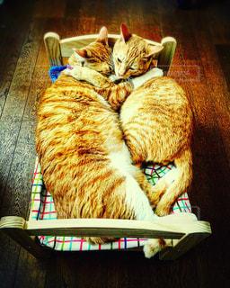 猫の写真・画像素材[671195]