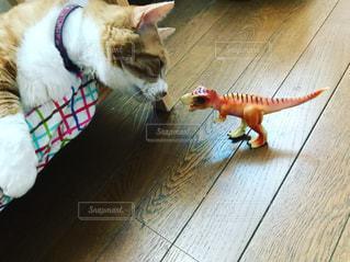 猫の写真・画像素材[696072]