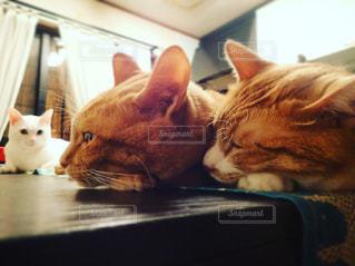 猫の写真・画像素材[696080]