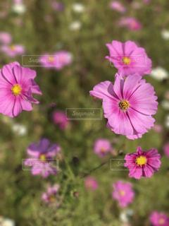 花の写真・画像素材[673564]