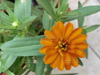 花の写真・画像素材[683629]