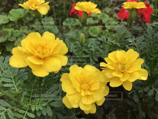 花の写真・画像素材[685342]