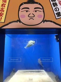 魚の写真・画像素材[688345]