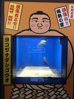 魚の写真・画像素材[688350]