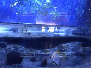 魚の写真・画像素材[688365]