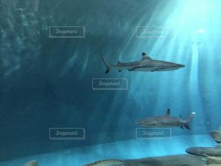 水族館の写真・画像素材[688392]
