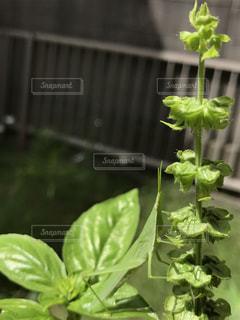 植物の写真・画像素材[693342]