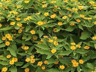 花の写真・画像素材[696196]