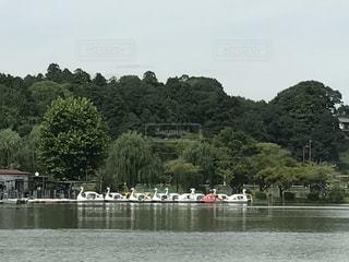 スワンボートのある風景の写真・画像素材[728268]