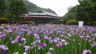 たくさんの紫色の花の写真・画像素材[728287]
