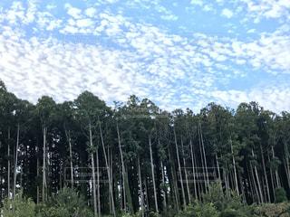 きれいに並んだ樹木🌲 - No.735533