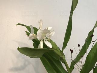綺麗な白い花♪(*^^*)の写真・画像素材[735686]