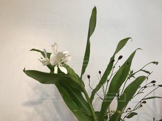 綺麗な白い花♪(*^^*)の写真・画像素材[735688]