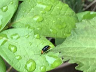 緑の葉に小さな虫の写真・画像素材[738849]