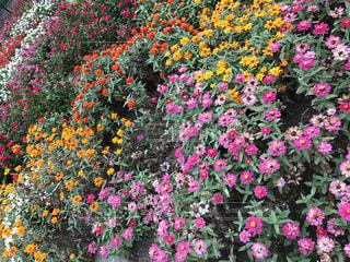 色鮮やかな花たち🌸🌼の写真・画像素材[744454]