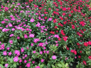 色鮮やかな花たち🌸の写真・画像素材[744477]