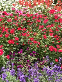 色鮮やかな花たち🌸🌼🌿の写真・画像素材[744486]