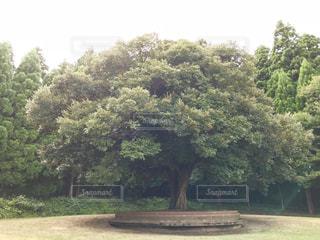 大きな木🌳の写真・画像素材[759490]