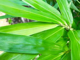 緑の植物🌿🍁🍂🍃の写真・画像素材[778211]