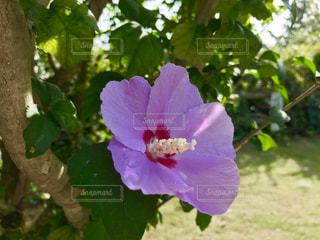 紫色の花のアップ🌸の写真・画像素材[778634]