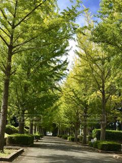 公園の並木道 - No.787695
