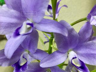 紫の花の写真・画像素材[791984]