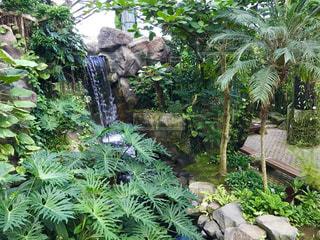 熱帯植物館の滝の写真・画像素材[792146]