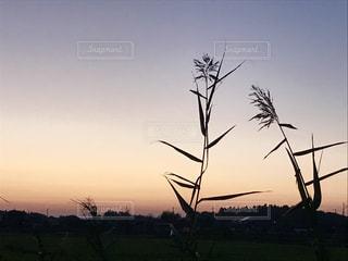 田舎の夕暮れの写真・画像素材[830478]