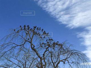 鳥がたくさん止まる木の写真・画像素材[846028]