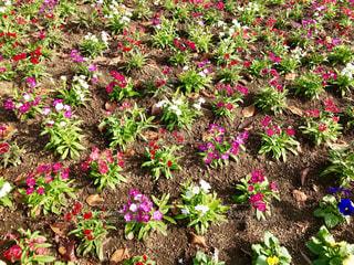 花壇の花🌸 - No.846051