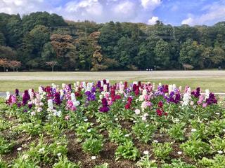 花壇の花🌺の写真・画像素材[846074]